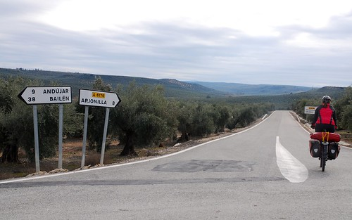 Cycling Through Olive Groves In Spain