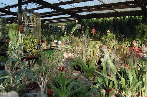 Lots o Plants.