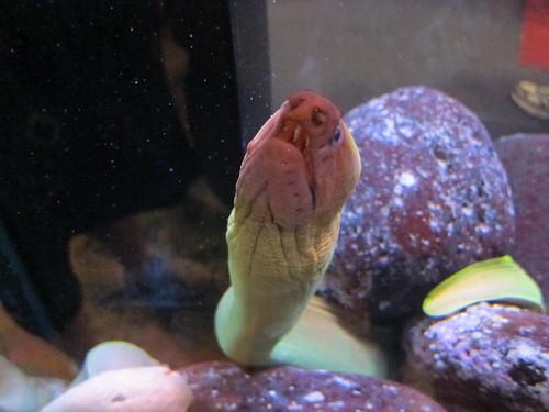 Eel at the War Memorial Museum