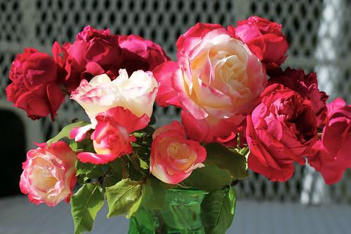 November-Roses