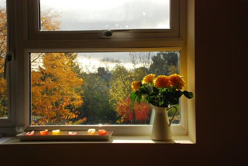 Autumn from my window