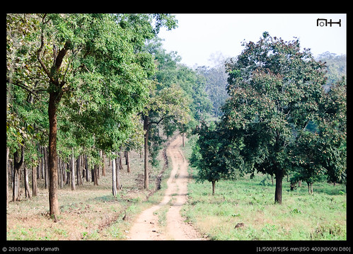 Jungle safari track | Kabini