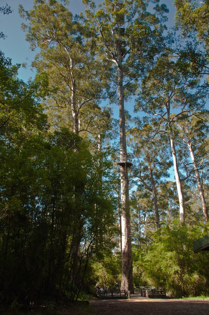 The Bicentennial Tree