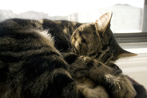 Dusty sleeping