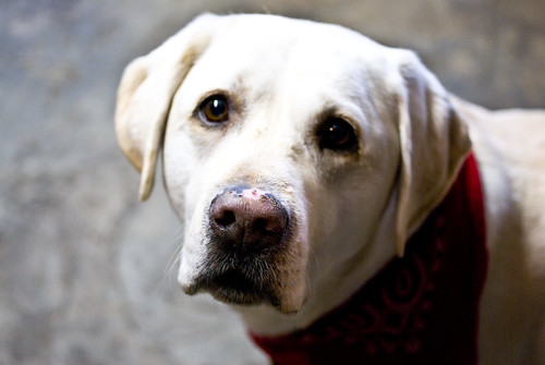 Dexter the Distillery Dog