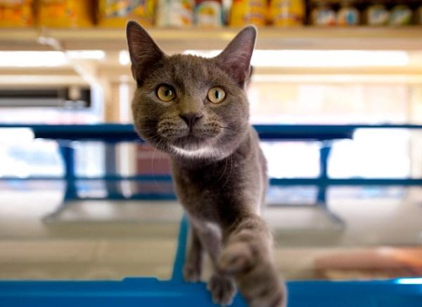 Pablo the Bodega Cat: Hunts Point Bronx