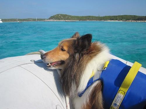 Bailey loves a dinghy ride!