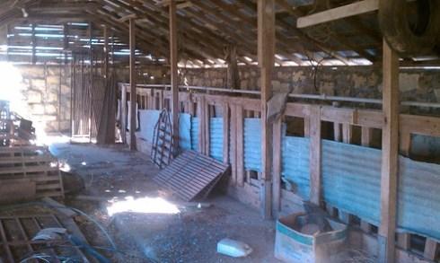 Milk barn stalls