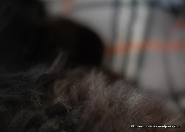Kemi Fur