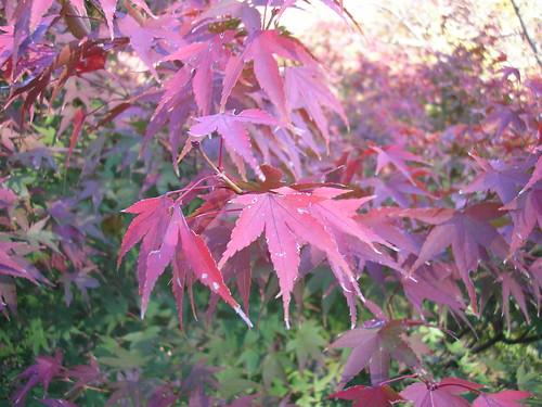 Hamamatsu Castle Park: Autumn leaves (23rd November 2010)