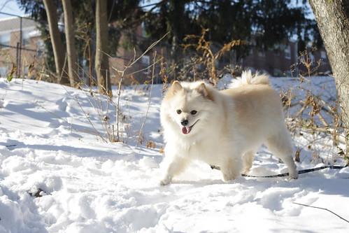 Buster enjoying his favorite element - snow