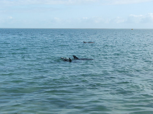 Monkey Mia Dolphin 6