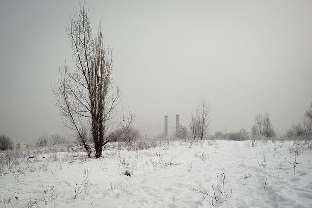 Unde se termină pădurea, unde începe orașul?