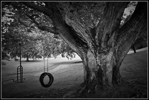 Tree at Michaels Park