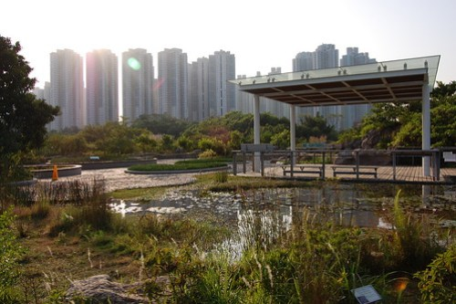 Hong Kong Wetlands, Ladies Market (68)