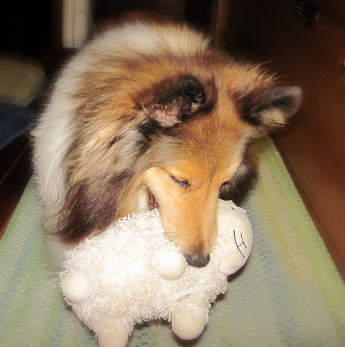 Bailey loves his sheepy