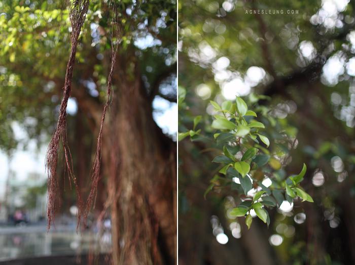 cu-tree