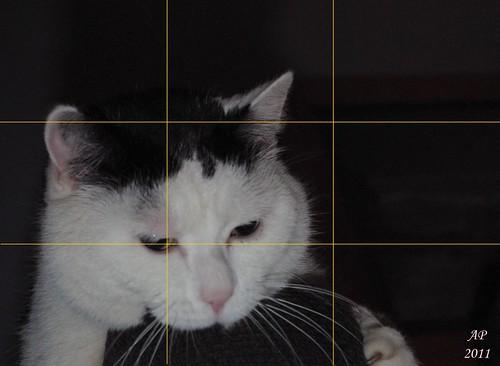 Chat sur canapé - avec lignes des tiers / Cat on Couch - with third lines