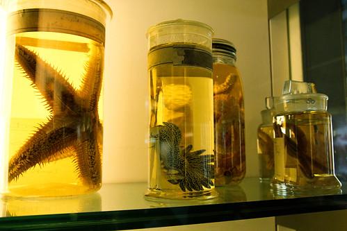Starfish-Natural-History-Museum