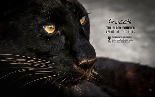 Close my eYez - Panthera by FotOrix Studio