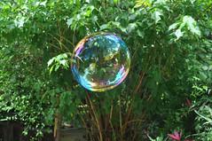 bolha de sabao 6