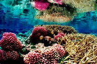 Coral Reef at Palmyra Atoll National Wildlife ...