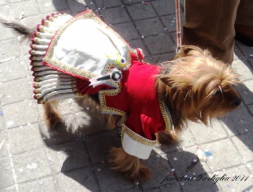 cane in costume di Oristano