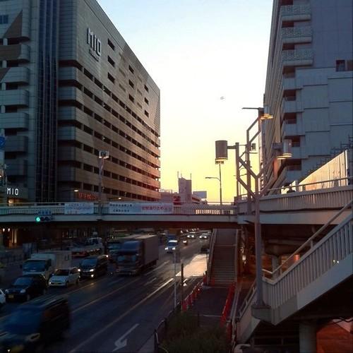 ゴミかなと思ったら鳥さんだったよ!(๑╹◡╹๑) #Osaka #Abeno #bird