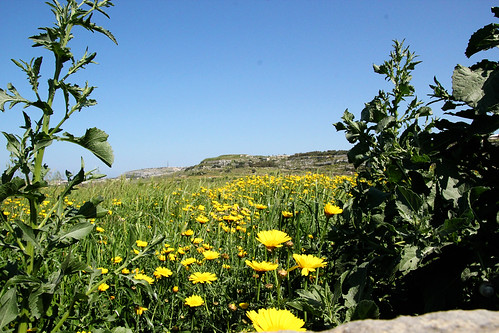 Field-near-Burmarrad