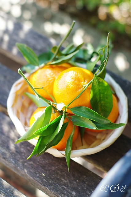 Tangerines in the garden