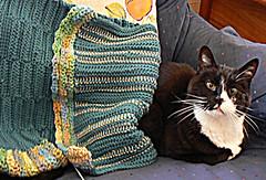 Bag & cat