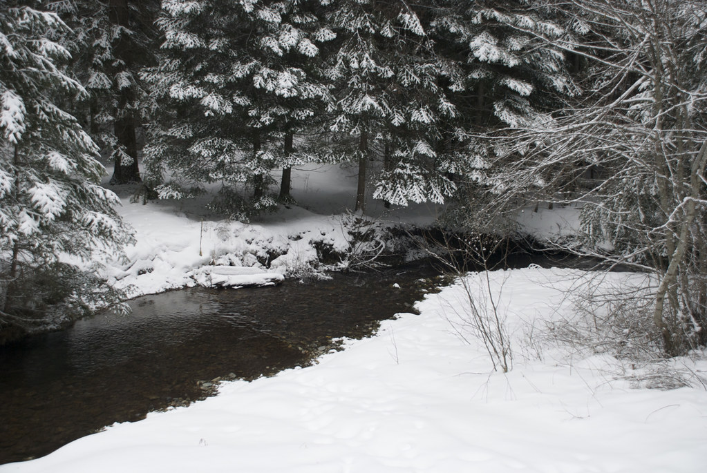 Weeksville Creek in winter