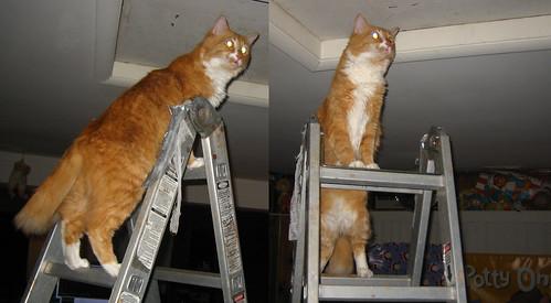20101227 2330 - Oranjello vs. ladder - IMG_2532-diptych-IMG_2529