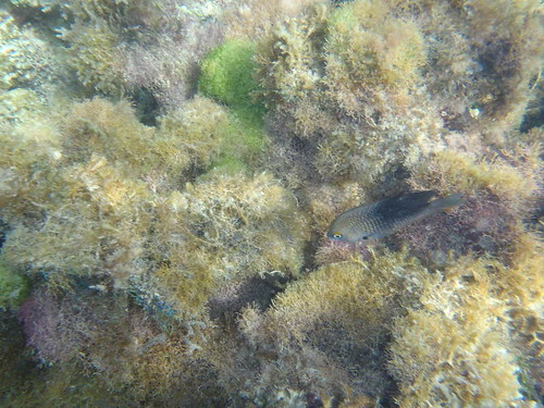 Jamaican Coral Reef