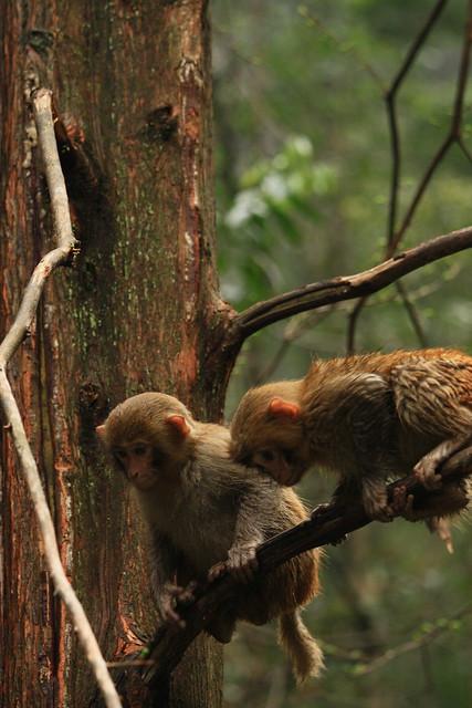 Zwei Affen auf einem Ast