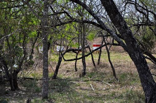 Coyote Bee Yard 3