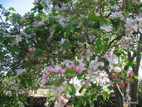 Letters to Littles: Apple Blossoms for Sar