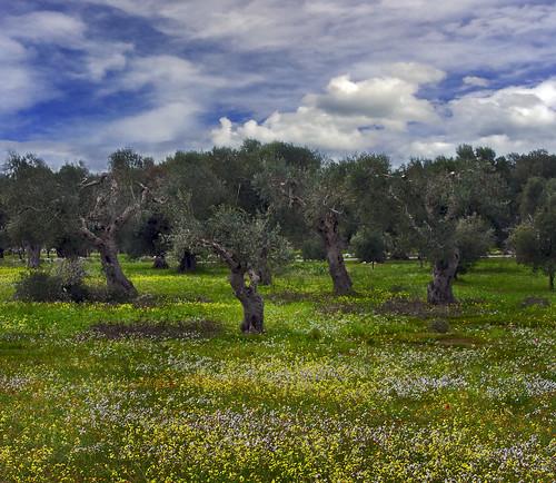 ©Gianfranco Budano: Woodland