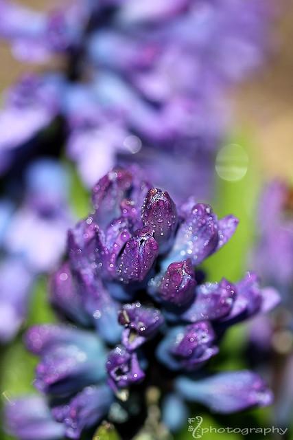 Spring Sparkle (6)
