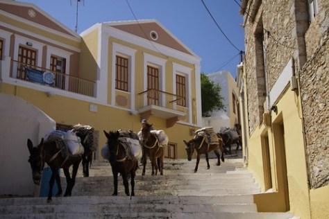 Donkeys, Symi