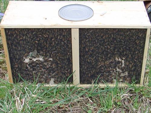 BeesBox