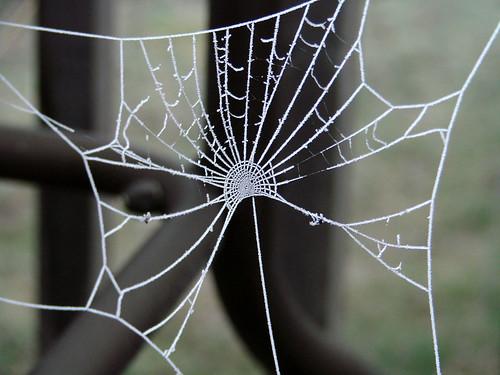 SpiderWebFrost