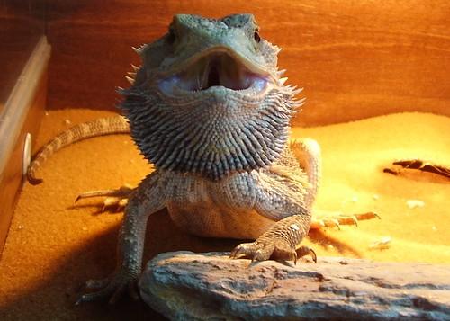 2011-04-23 angry Keiko