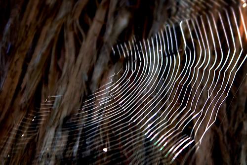 Web Light by BaboMike