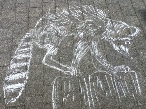Chalk raccoon