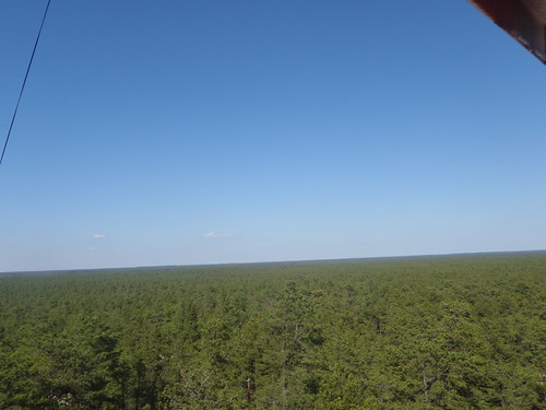 This is South Jersey (view from Apple Pie Hill fire tower)