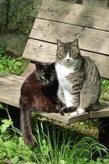 生田緑地の猫(Cat, Ikuta Ryokuchi Park, Kawasaki, Kanagawa, Japan, 2011)