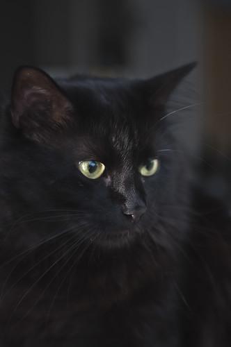Cat portrait by S.Stikine 