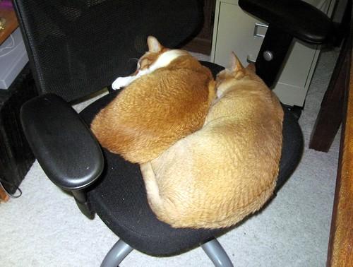Cat Nap 1