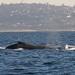 27 whale